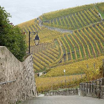Steep Path in the Lavaux Vineyards by Colleen Williams