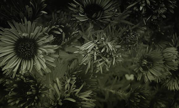 Stellarators by Marcus Hammerschmitt