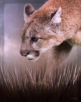 Step Forward - Cougar Art by Jordan Blackstone