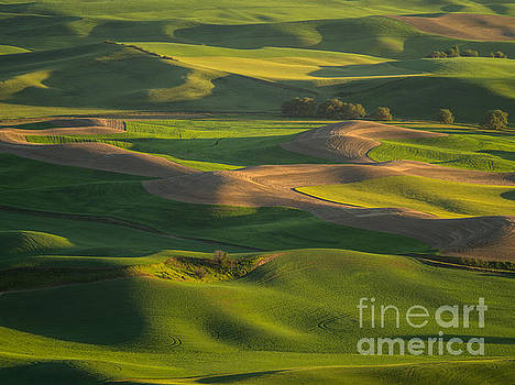 Steptoe Butte by Tracy Knauer