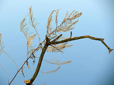 Sticks by Azthet Photography