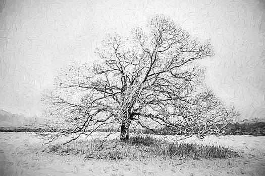 David Letts - Still Alone