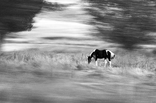 James Steele - Still But In Motion