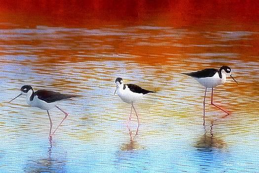 Stilt Marsh Sunset by Barbara Chichester