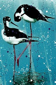 Stilt Splash by Barbara Chichester
