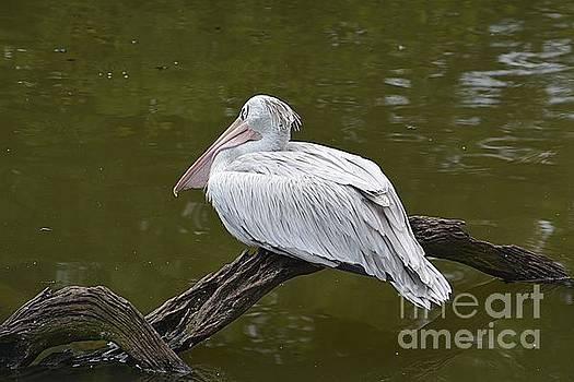Stork at Rest by Janice Spivey