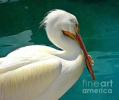 Stork by Janice Spivey