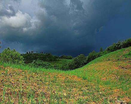Storm by Janet Pancho Gupta