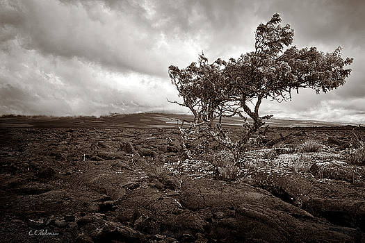 Christopher Holmes - Storm Moving In - Sepia