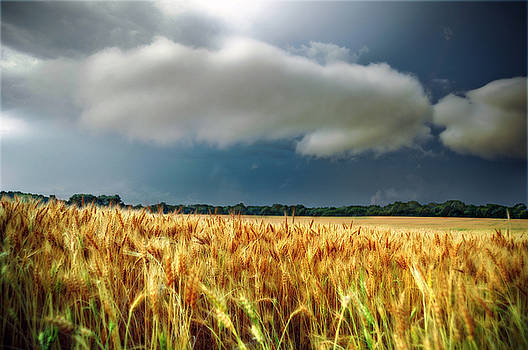 Storm Over Ripening Wheat by Eric Benjamin