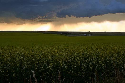 Mario Brenes Simon - Storm over the canola fields