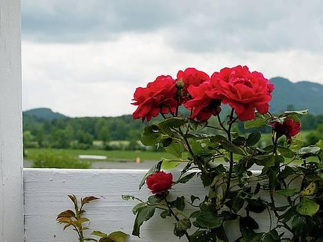 Stormy Roses by Valeria Donaldson