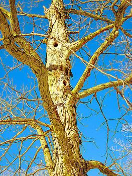 Strange Tree by Guy Ricketts