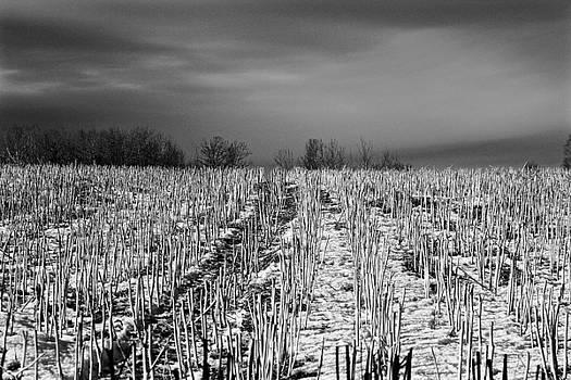 Straw fields by Brian Sereda