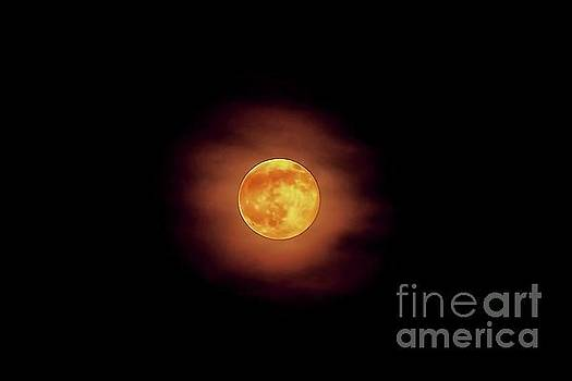 Strawberry Moon by Arnie Goldstein