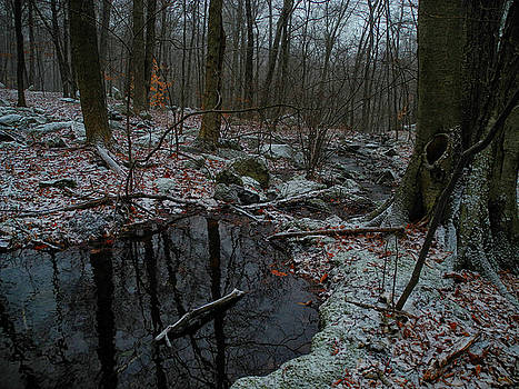 Stream Comes Down Along the AT in NY by Raymond Salani III