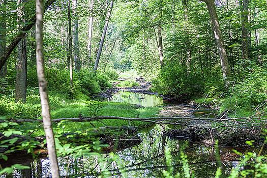Terry Thomas - Stream Through a Forest 2H