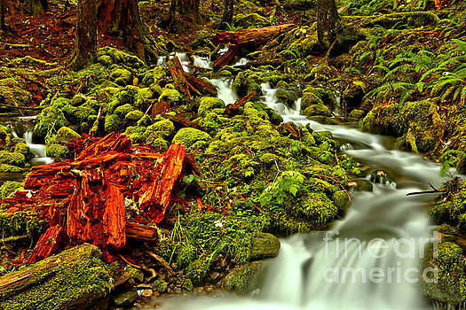 Streaming Through Lush Red And Green by Adam Jewell
