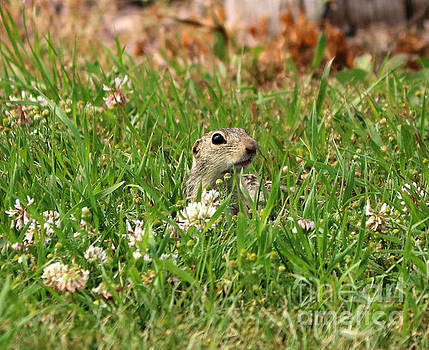 Striped Gopher by Lori Tordsen