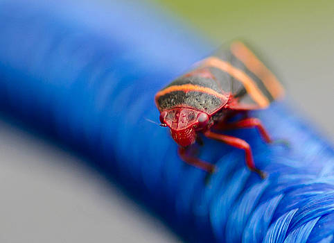 Stripped bug by Don L Williams
