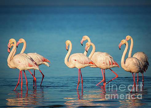 Strolling Flamingos by Inge Johnsson