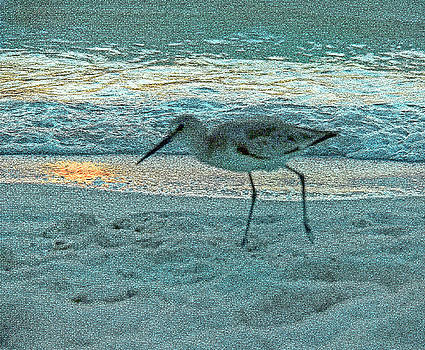 Strolling Sandpiper at Sunset by Donna Haggerty