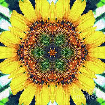 Structure of A Sunflower by Phil Perkins