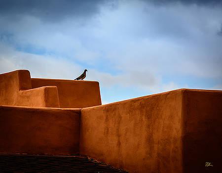 Stucco Bird by Pat Scanlon