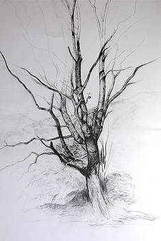 Harry Robertson - Study of a Tree