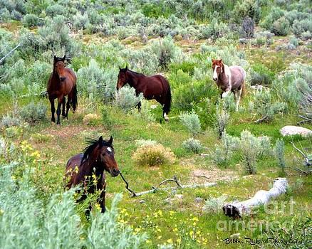 Stunning Wild Mustangs  by Bobbee Rickard