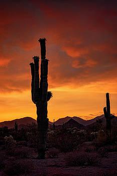 Saija Lehtonen - Sublime Sonoran Sunset