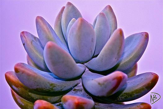 Succulent Sara by Nicole Dumond-Barry