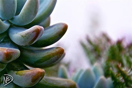 Succulent Stanley by Nicole Dumond-Barry