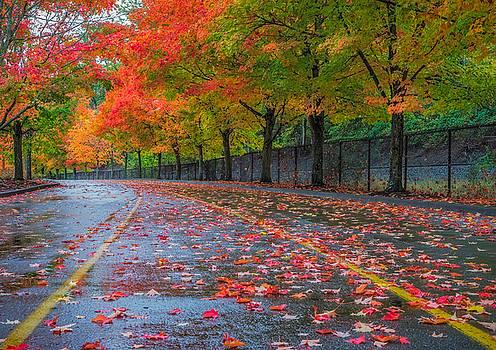 Sugar Maple Drive by Ken Stanback