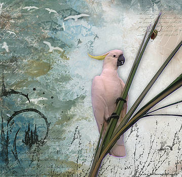 Sulphur-Crested Cockatoo and Beetle by Lesley Smitheringale