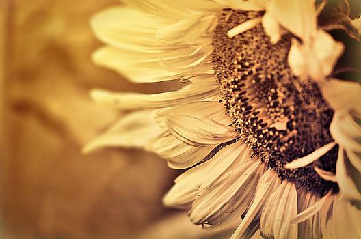 Summer Afternoon by Douglas MooreZart