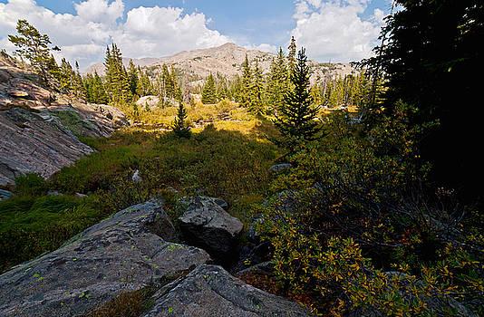 Summer Alpine Dreams by Chris  Allington