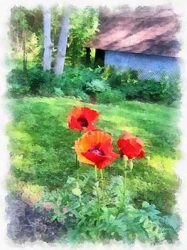 Summer Backyard Poppies by Maciej Froncisz