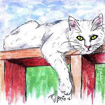 Summer Cat by P J Lewis