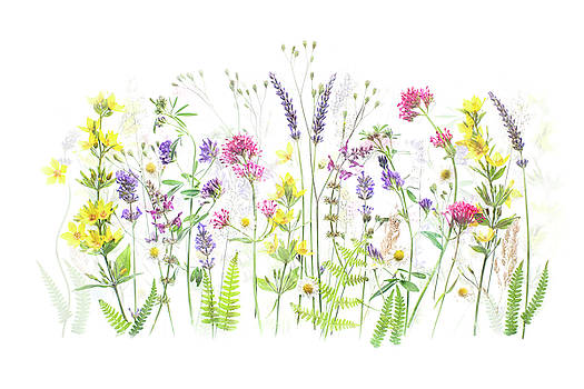 Summer Delights by Jacky Parker