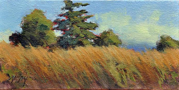 Summer Fields by Mary Byrom