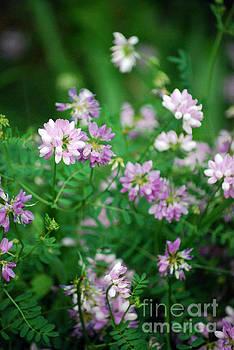 Summer Flower Folage by Rebecca Armermann