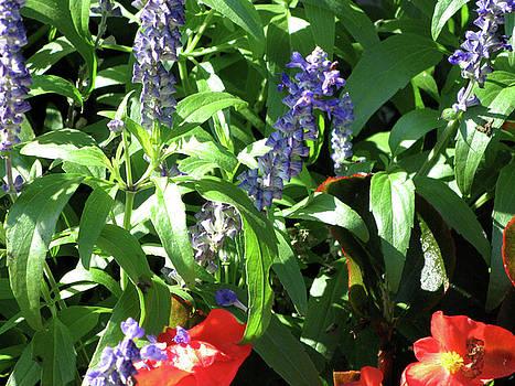 Summer Flowers by Michele Wilson
