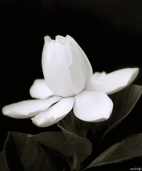 Holly Kempe - Summer Fragrance