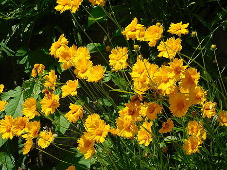 Summer Gold Flowers by Nancy Spirakus