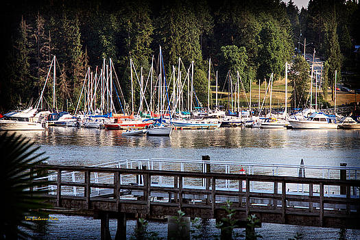 Summer in Deep Cove by Tom Buchanan
