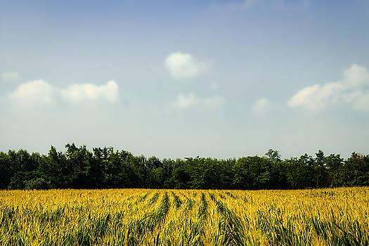 Summer Landscape by Cesare Bargiggia