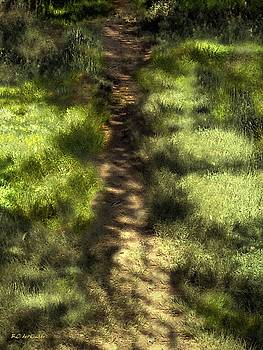 Summer Light and Shadow by RC deWinter