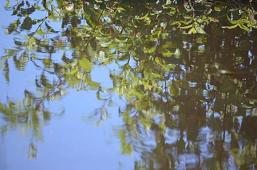 Maria Urso  - Summer Reflections