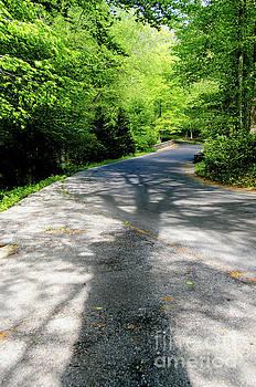 Summer Shadows Nature Photograph by Melissa Fague